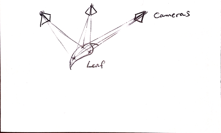 Diagram of leaf with three camera observations