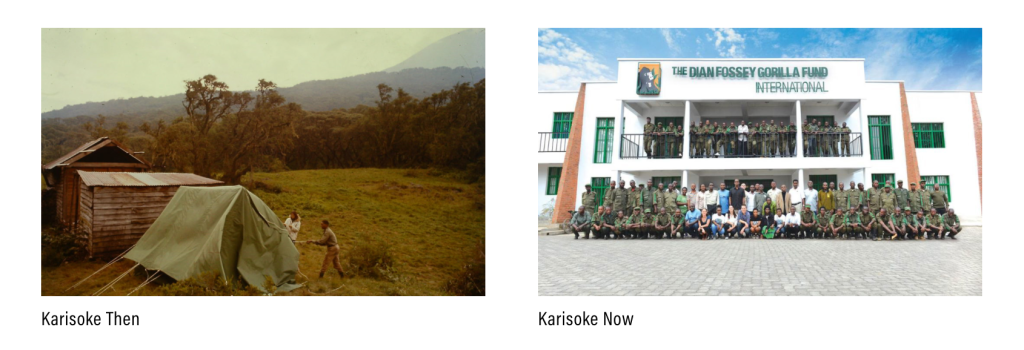 Image of Karisoke then and now